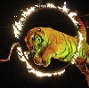 Цирки в Ишеевке