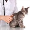 Ветеринарные клиники в Ишеевке